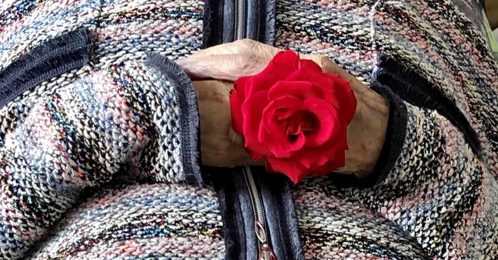 Opbaren handen met een rode roos.