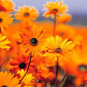 foto bloemen.